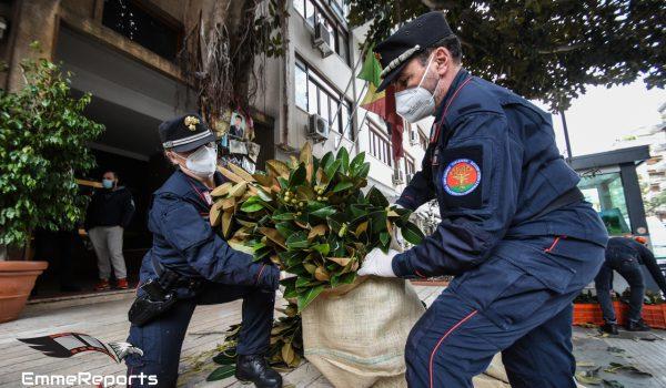 I Carabinieri portano l'Albero di Falcone in tutta Italia