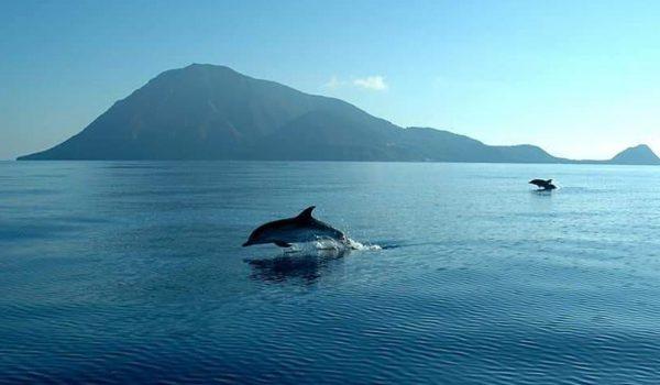 Lo show dei delfini: uno spettacolo incredibile alle Eolie