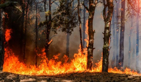 Sicilia in fiamme: anche Portella della Ginestra è distrutta